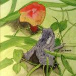 Toad with Mushroom
